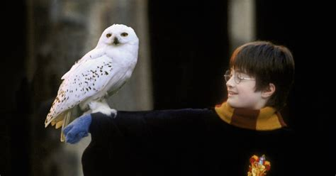 This Clever Theory Might Explain Why Hedwig Had To Die In