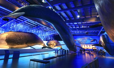 Good pod! Iceland opens Europe's biggest whale museum
