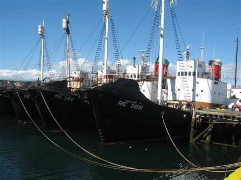 Whaling in Iceland - Wikipedia