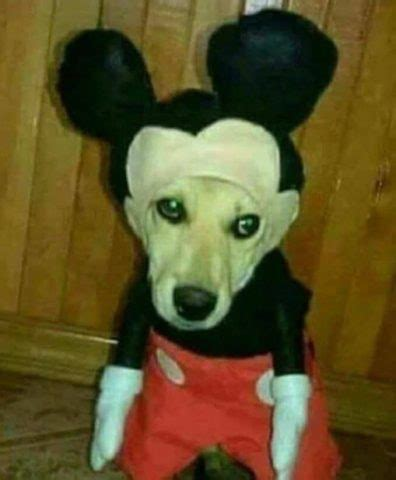 Cursed Images: Creepy Costumes Edition 👻   Doge Much Wow