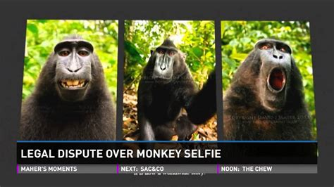 Monkey takes selfie, photographer sues for copyright