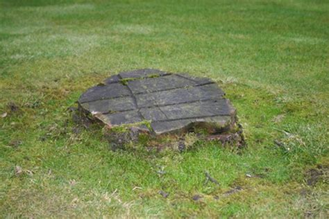 How to Get Rid of Tree Stumps in Your Yard   Hunker