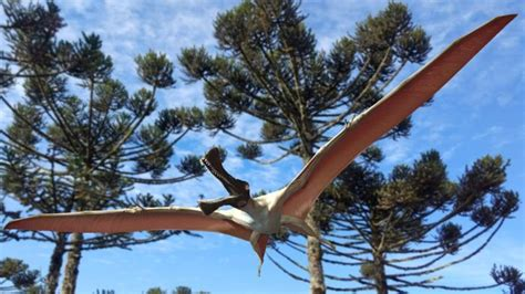 A new pterosaur, or prehistoric flying reptile species