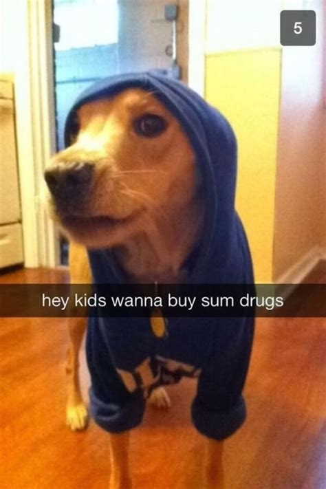 30 Of The Funniest Dog Snapchats That Mastered The Art Of