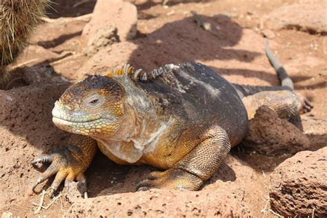 Wildlife Photography on the Galapagos Islands - G Adventures