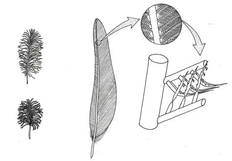 """Pterosaurs to Birds: """"Bird feathers are analogous to the"""