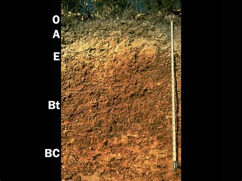 Ultisols | Soil & Water Systems | University of Idaho