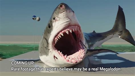 Real Megalodon Footage? World's Largest Shark - YouTube
